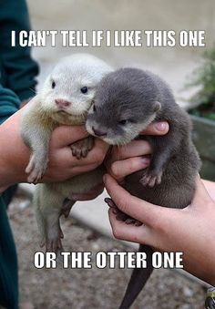 "I'm OBSESSED with ""little baby otters!"" Anything that has to do with otters reminds me of you @Jordan Leigh"