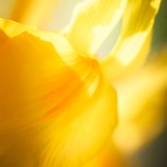 Abstract Yellow Flower Print  Yellow Art  by CrionnaPhotography, $25.00