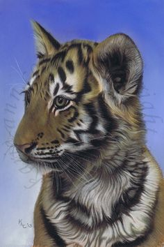 Tiger cub wildlife art in pastel from Art by Karie-Ann. International commissions welcome.