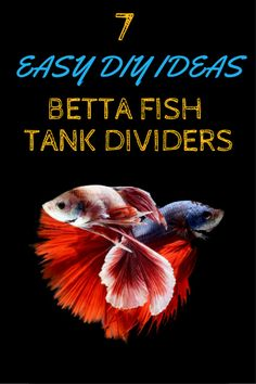 7 Easy DIY Ideas for Betta Fish Tanks with Divider - TFCG I really like the last one that doubles as a filter.