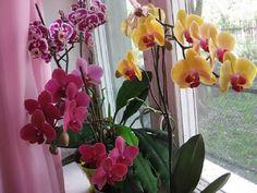 Minden amit tudnod kell az orchidea virágzásáról! Megmutatjuk, hogyan kell gondozni! Garden Landscaping, Indoor Plants, Glass Vase, Gardening, Landscape, Fruit, Terrarium, Therapy, Houses