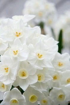 Spring with Daffodils in White and Yellow