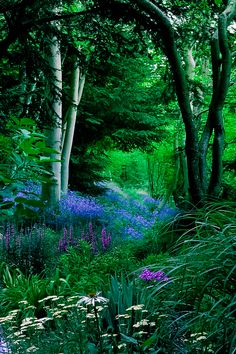 Wild flowers in the forest! my withy garden ; Beautiful World, Beautiful Gardens, Beautiful Places, Beautiful Pictures, Beautiful Forest, Beautiful Scenery, Simply Beautiful, Woodland Garden, Woodland Forest