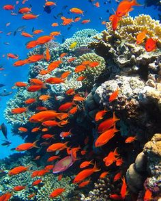 Lovely Snorkeling in the Red Sea - Beautiful