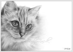 Ragdoll Cat Sadia