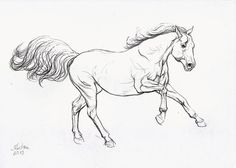 Horse drawing original animal drawing horse by Christinasketchbook, $38.00