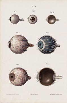 1853 Antique EYES print fine anatomy by TwoCatsAntiquePrints, $29.00
