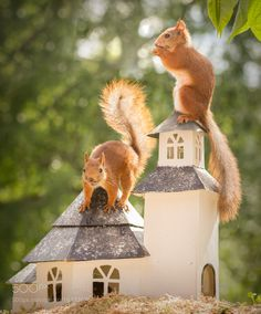 church invaders by geertweggen #animals #animal #pet #pets #animales #animallovers #photooftheday #amazing #picoftheday