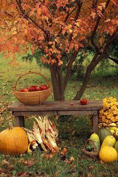Fall Outdoors Idea