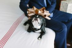 This cute pup is the ring bearer: http://www.stylemepretty.com/canada-weddings/ontario/toronto/2014/10/14/boho-chic-toronto-wedding-at-the-thompson-hotel/ | Photography: Celine Kim - http://celinekimphotography.com/