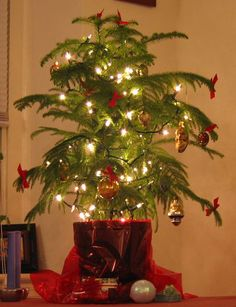 Many people are starting to use a living Christmas tree instead of a cut one. The top choice for that tree is a Norfolk Island Pine tree. These trees are beautiful but a bit picky about their environment. If you want them to stay living, you will have to take good care of them. Norfolk…