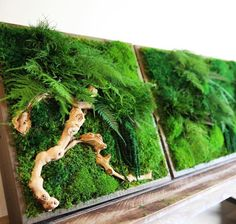 "Designer Erin Kinsey is something of a moss boss. Her handcrafted botanical artwork transforms one's living space by bringing the beauty of the outdoors, inside. Combining a dual passion for design and nature, she has established a company named Artisan Moss which offers one-of-a-kind plant wall art that is ""simple, forever green and maintenance free."""