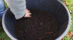 La culture des endives bio Vous pouvez semer les endives de la mi-avril à la fin juin. Semez en pleine terre en rangs espacés de 30 cm environ, à raison de 8 à 10 plants par mètre. La levée est rapide. Vous pouvez faire du plan en chassis J'ai repiqué...