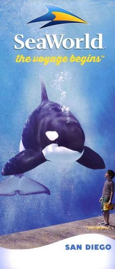Sea World of California! Moving here I'm a few weeks getting excited