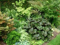 gardenJuly10 324