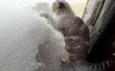Cat Digging Snow
