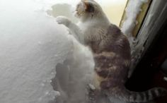 Cat Digging Snow