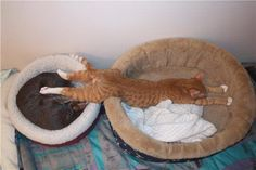 "all of these 25 awkward cat sleeping positions are amazing. this one: ""sheer, unadulterated greed."" hahaha, amazing."