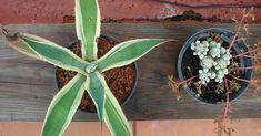 Causas y remedios para cuando las plantas ennegrecen