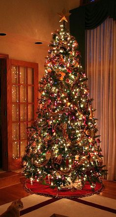 Another shot of our tree, this time with available light.     Artificial christmas trees for sale - Special reduced prices on prelit artificial Christmas trees. Large selection of sizes available with clear