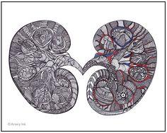 Kidneys - 8x10 or 11x14 PRINT