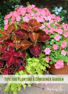 Plant the most beautiful planters and pots! Here is the secret!