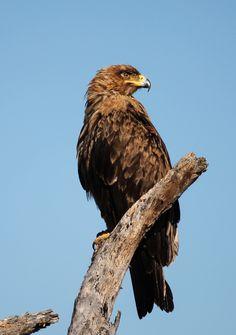 African Name, South African Birds, Kruger National Park, Nature Reserve, Bald Eagle, Snake, Wordpress, Wildlife, Southern