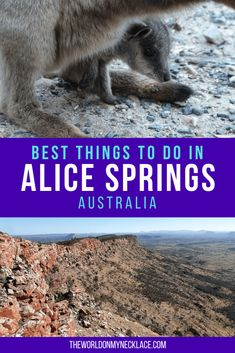 I expected to dislike Alice Springs. But with a vibrant cafe culture, gorgeous animals, and great hiking, Alice Springs turned out to be pretty cool. Australia Travel Guide, Visit Australia, Western Australia, Australia Holidays, Melbourne, Sydney, Travel Tips, Travel Guides, Travel Articles
