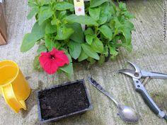 how to grow hanging petunias