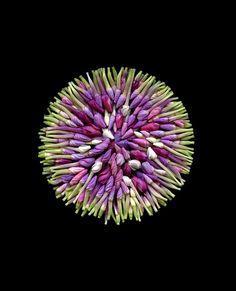 Phlox paniculata by horticultural art