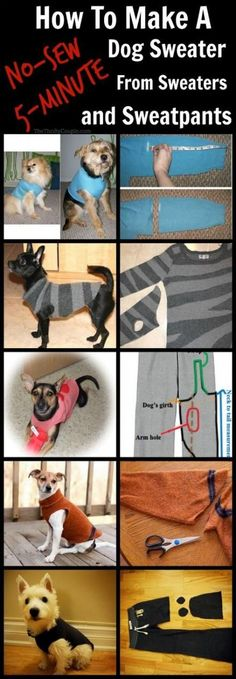 How To Turn Old Sweaters and Sweatpants Into No-Sew Dog Sweaters in This is AWESOME! Learn how to make a no-sew dog sweater or pet sweater from a sleeve or pant leg from a sweater, sweatshirt, sweatpants, fleece shirt or pants or really any long sleeved Diy Pour Chien, Zee Dog, Cute Little Dogs, Dog Clothes Patterns, Dog Pattern, Free Pattern, Dog Sweaters, Dog Shirt, Dog Cat