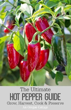 Grow Vegetables The Ultimate Hot Pepper Guide: Grow, Harvest, Cook, Low Carb Vegetables, Growing Vegetables, Fruits And Veggies, Gardening Vegetables, Chile Picante, Growing Peppers, Hot Sauce Recipes, Hot Pepper Recipes, Pepper Plants