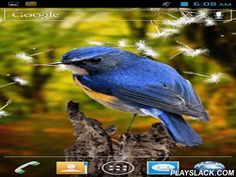 Birds 3D  Android App - playslack.com , Birds 3D - live wallpapers give you a possibility to watch the glamour of live nature without leaving your home. You will get informed  with non-identical kinds of birds and enjoy unbelievable landscapes.