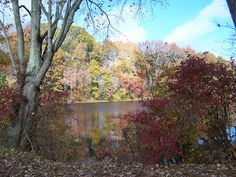 Maskell's Mill Pond - Fall 2011