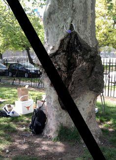 Vagina (vulva) tree, no more!