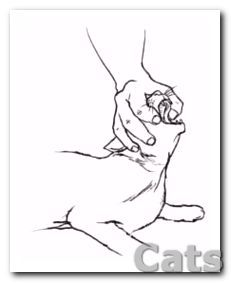 How To Help a Choking Cat