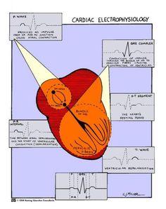ECG translation onto Cardiac Anatomy Medical Surgical Nursing, Cardiac Nursing, Nursing Mnemonics, Nursing Tips, Nursing Notes, Med Surg Nursing, Rn School, Critical Care Nursing, Medical Information