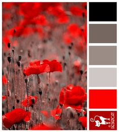 Poppy Red - Black, Grey, Red - Designcat Colour Inspiration Pallet                                                                                                                                                      More