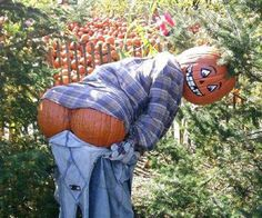 Scarecrow...hee, hee! - LOL!!! Mooned by a squash