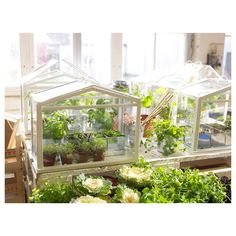 Une adorable mini-serre pour créer un jardin d'hiver ! On peut aussi y placer des bougies pour une déco chaleureuse.