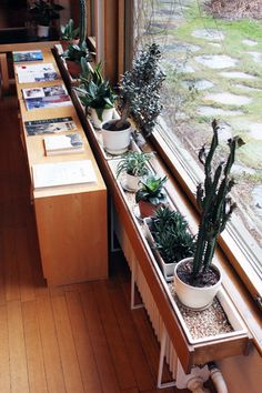 alvar alto, windowsill of cacti