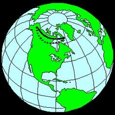A study in the January 12, 2001 issue of Science, shows that migrating Arctic shorebirds birds match modern airline pilots in their navigational feats. Pilots know that the shortest distance between two points on the globe is not a straight line but rather an arc, known as a great circle.  However, unlike airline pilots who are guided by a compass or a radio or satellite signal, birds rely on the sun and their intrinsic biological clock.