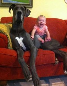 Dogs That Will Do Anything For Kids. http://pewpaw.com/?p=11775