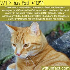Ginger cat picks stocks better than the professional investors - WTF fun facts
