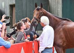 American Pharaoh the day after the Travers saying goodbye to New York