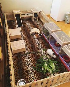 Cute guinea pig cage!
