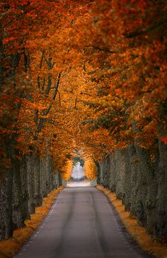 Reminds me of Grandmas but hers is a dirt road. Used to love driving thru it to get to her house in the fall. Magical!!!
