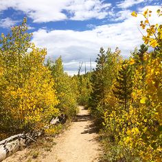 Denny's Point - Pingree Park. Great hike for aspens. No facilities at trailhead.