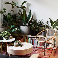 Today's pocket-sized pad in Abbotsford takes indoor gardening to another level! This tiny worker's cottage belongs to interior designer Jason Chongue (aka @theplantsocietyau) and his partner Nathan Smith, a flight attendant. Together, they have lovingly cultivated a huge collection of rare plants, all living happily under one roof. Full story with pics by @annetteobrien on TDF today - link in profile