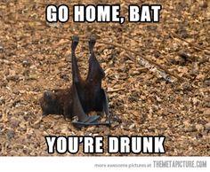 Go home, bat…